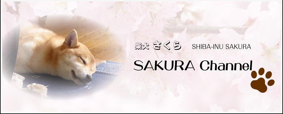 Shiba-Inu SAKURA Growth Blog